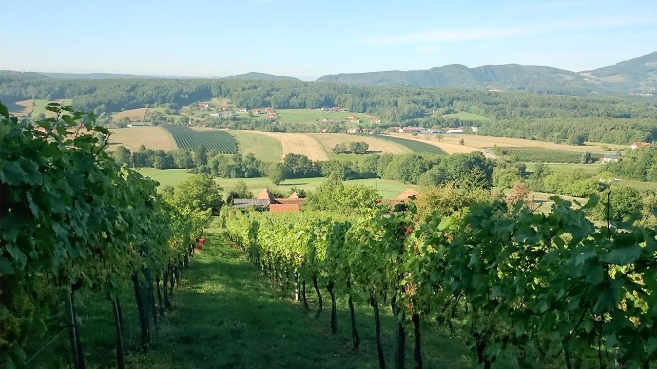 Ausblick vom Weingarten der Familie Gutmann